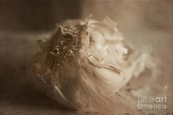 Photograph - Garlic 1 by Elena Nosyreva