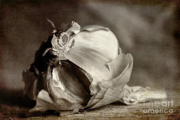 Photograph - Garlic 3 by Elena Nosyreva