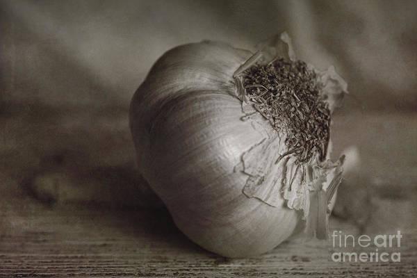 Photograph - Garlic 4 by Elena Nosyreva