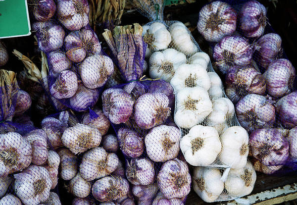 Herbs Photograph - Garlic by Antonia Reeve/science Photo Library
