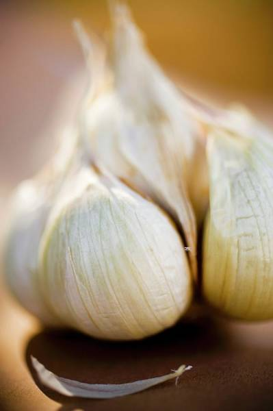 Vegies Photograph - Garlic Bulb (close-up) by Foodcollection