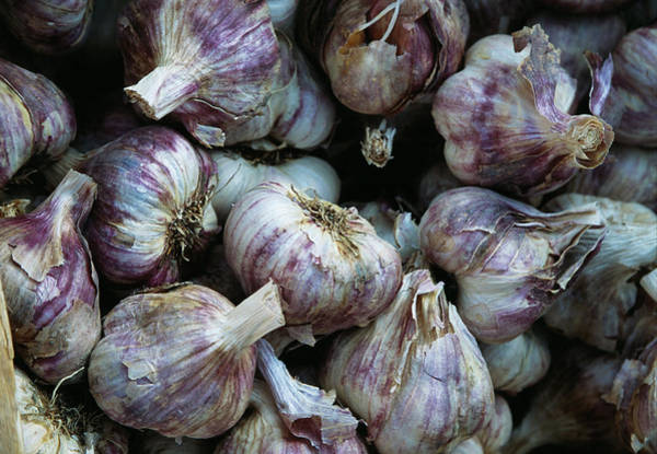 Pungent Photograph - Garlic Bulbs by Antonia Reeve/science Photo Library