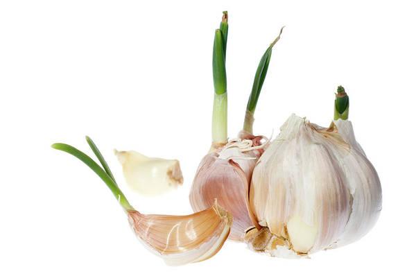 Wall Art - Photograph - Garlic Cloves by Daniel Sambraus/science Photo Library