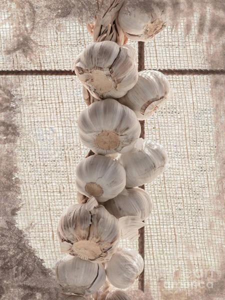Photograph - Garlic by Elaine Teague