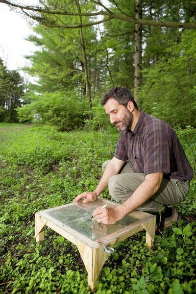 Gi Photograph - Garlic Mustard Research by Peggy Greb/us Department Of Agriculture