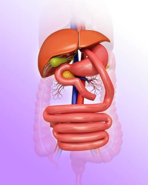Three Dimensional Wall Art - Photograph - Gastric Bypass by Pixologicstudio