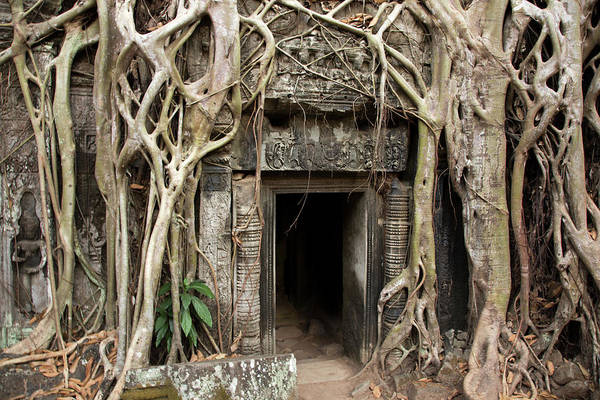 Cambodian Photograph - Gates Embraced By Jungle, Ta Prohm by Pawel Toczynski