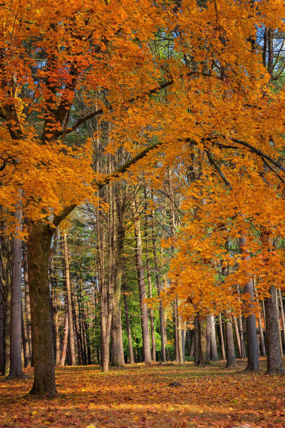 Photograph - Gateway To The Forest by Bill Wakeley