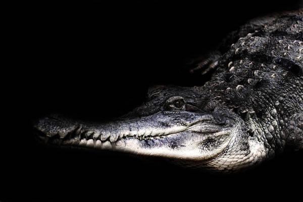 Gator Photograph - Gator by Martin Newman