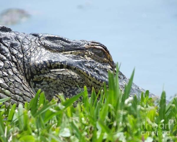 Photograph - Gator Watching by Lizi Beard-Ward