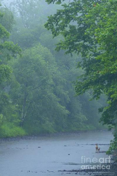 Wall Art - Photograph - Gauley River Summer Rain by Thomas R Fletcher