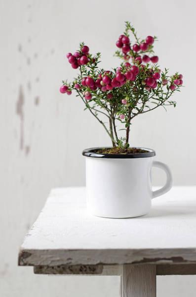 Mug Photograph - Gaultheria Mucronata Pernettya by Tania Mattiello