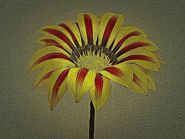 Photograph - Gazania Flower Photographic Art by David Dehner