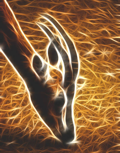 Photograph - Gazelle Fractalius by Maggy Marsh