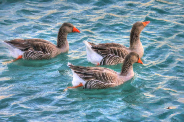 Painting - Geese 2106 by Dean Wittle