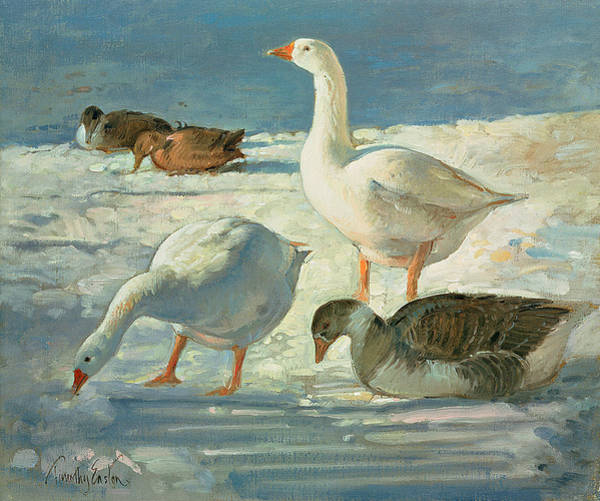 Wall Art - Photograph - Geese And Mallards, 2000 Oil On Canvas by Timothy Easton