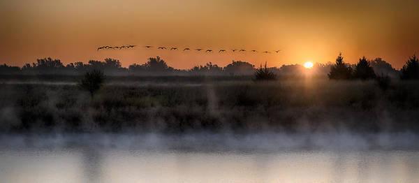 Geese At Sunrise Art Print by Garett Gabriel