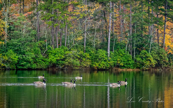 Photograph - Geese Cruise by Mike Covington