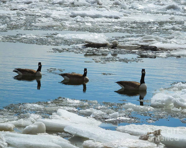 Photograph - Geese Of Three by Kristen Fox