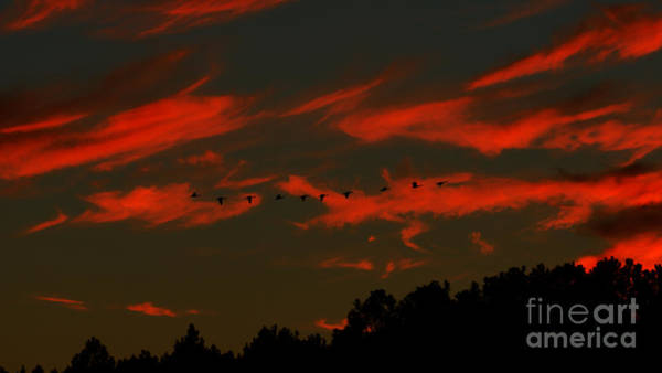 Photograph - Geese Setting In Southern Skies by Kim Pate