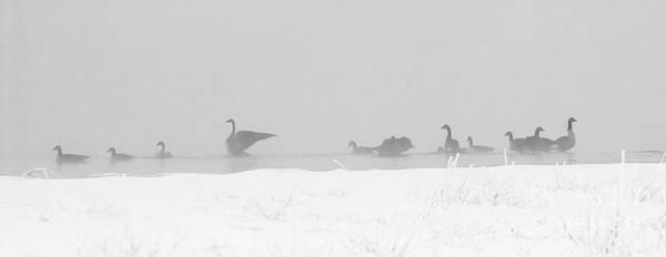 Photograph - Geese  by Steven Ralser