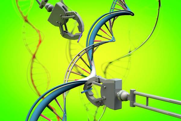 Wall Art - Photograph - Genetic Engineering by Ella Maru Studio / Science Photo Library