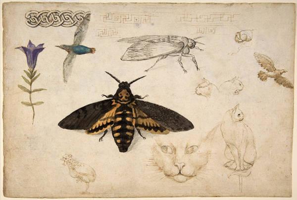 Painting - Gentian, Moth, Birds, Cats, C. 1535 by Metropolitan Museum of Art