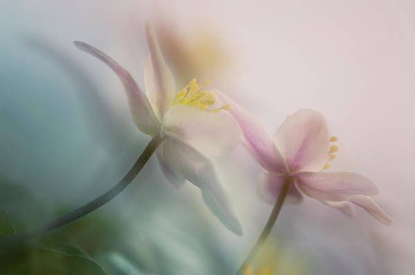 Soft Color Photograph - Gentle by Anton Van Dongen