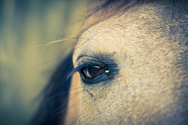 Photograph - Gentle Eye by Priya Ghose