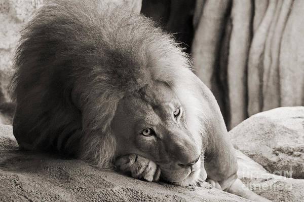Photograph - Gentle Strength by Lula Adams