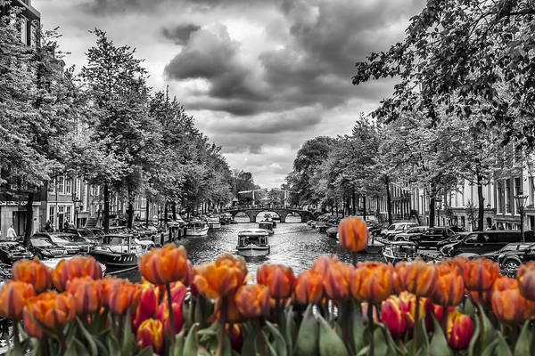 Dutch Tulip Photograph - Gentlemen's Canal  Amsterdam by Melanie Viola