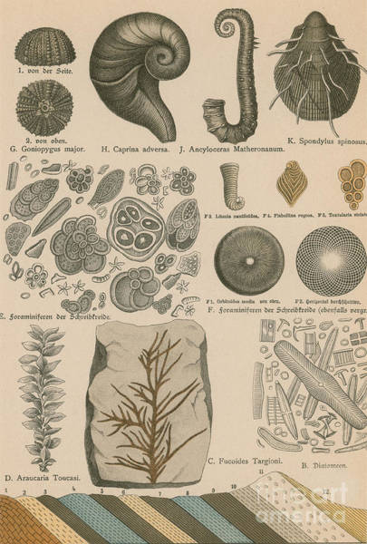 Photograph - Geology And Paleontology 1886 by Science Source