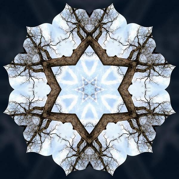 Photograph - Geometry Tree by Derek Gedney