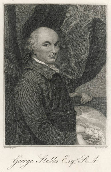 George Stubbs (1724 - 1806) English Art Print