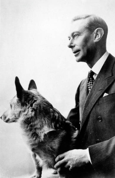 Wall Art - Photograph - George Vi  With His Dog        Date by Mary Evans Picture Library