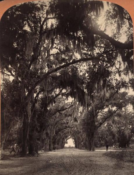 Painting - Georgia Oak Trees, C1887 by Granger