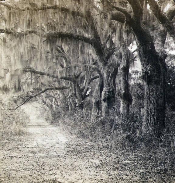 Photograph - Georgia Savannah, C1863 by Granger
