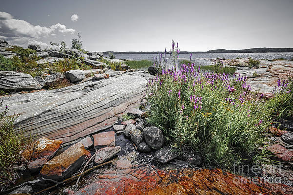 Photograph - Georgian Bay Iv by Elena Elisseeva