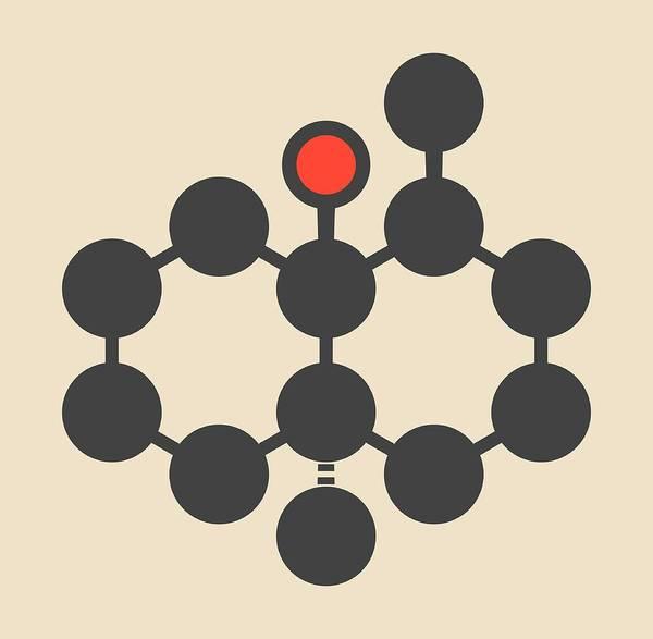 Beetroot Wall Art - Photograph - Geosmin Earthy Flavour Molecule by Molekuul