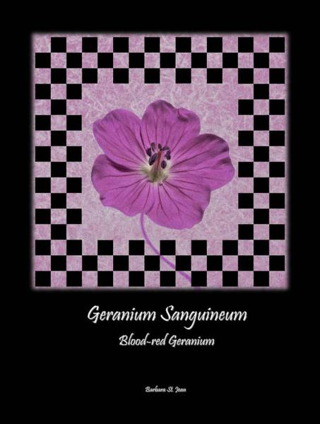 Digital Art - Geranium Purple Poster 1 by Barbara St Jean