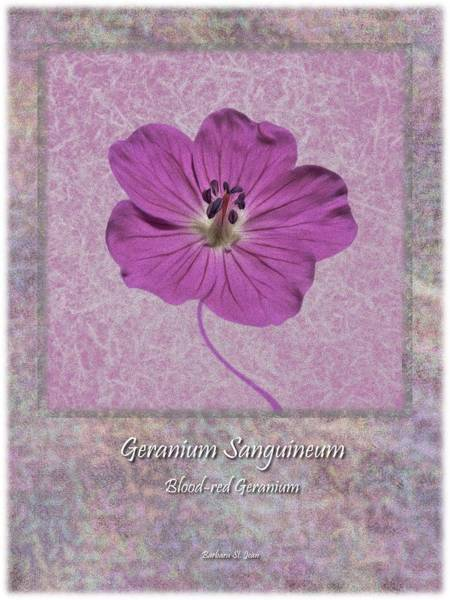 Digital Art - Geranium Purple Poster 4 by Barbara St Jean