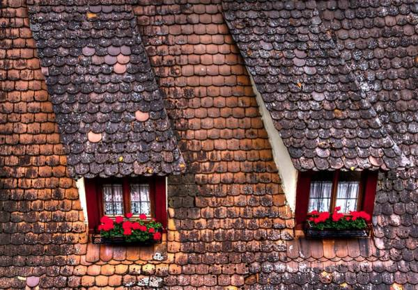 Photograph - Geraniums On The Roof by Jenny Setchell
