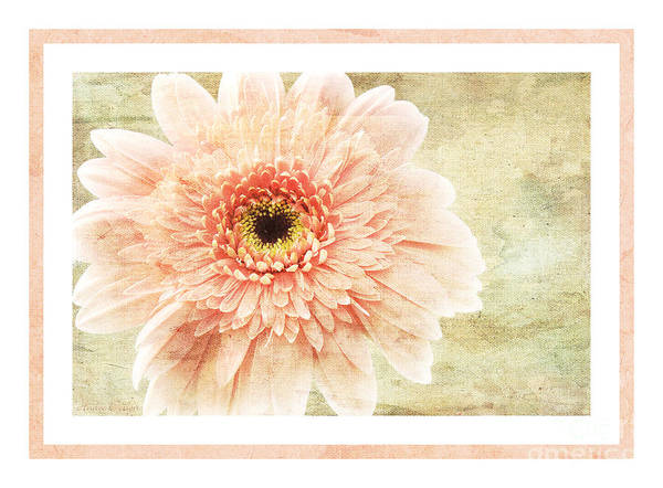 Wall Art - Photograph - Gerber Daisy 1 by Andee Design