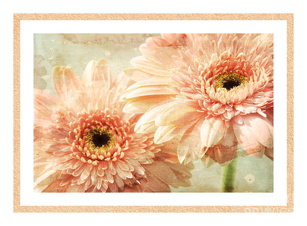 Wall Art - Photograph - Gerber Daisy 2 by Andee Design