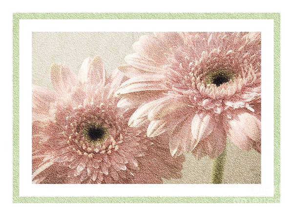 Wall Art - Photograph - Gerber Daisy 3 by Andee Design