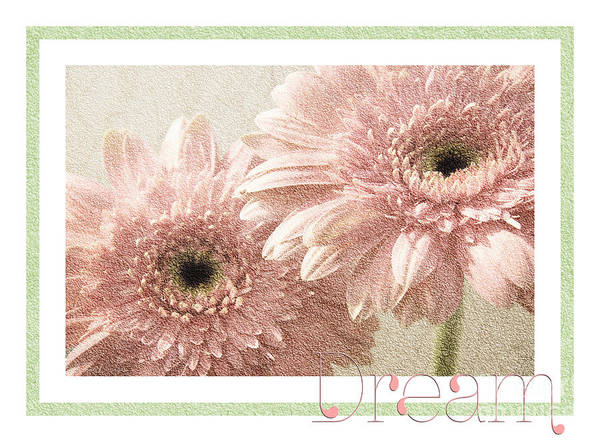 Wall Art - Photograph - Gerber Daisy Dream 3 by Andee Design