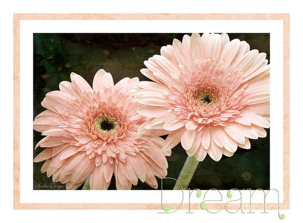 Photograph - Gerber Daisy Dream 5 by Andee Design