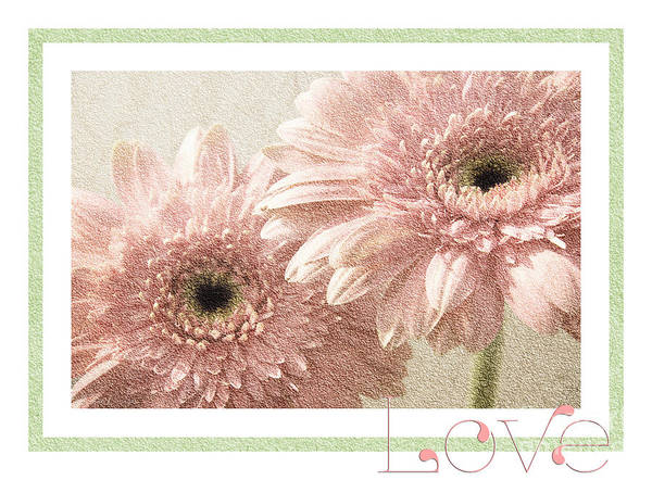 Photograph - Gerber Daisy Love 3 by Andee Design