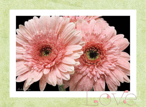 Photograph - Gerber Daisy Love 4 by Andee Design