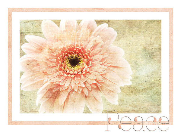 Wall Art - Photograph - Gerber Daisy Peace 1 by Andee Design